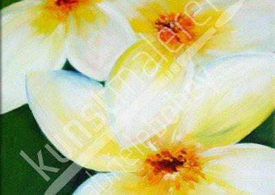 3 Frangipani Blüten in weiß auf grünem Hintergrund mit Ölfarben gemalt