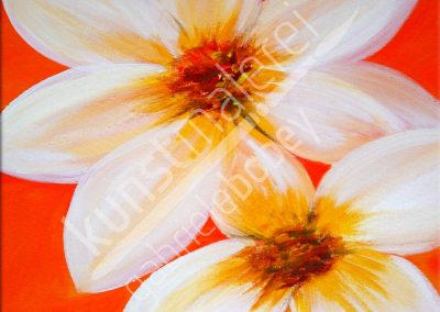 Blumen Frangipani Blüte auf oranger Leinwand