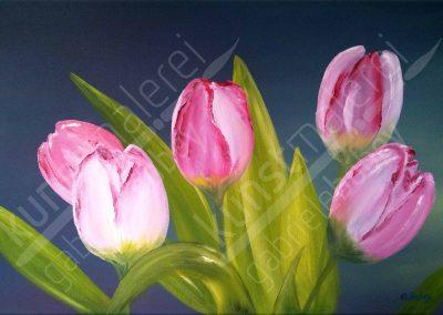 Rosa Tulpen auf blauem Hintergrund in Öl