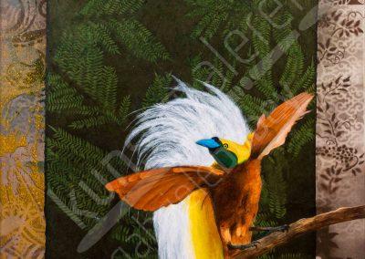 Ein Raggi Paradiesvogel aus Papua Neuguinea