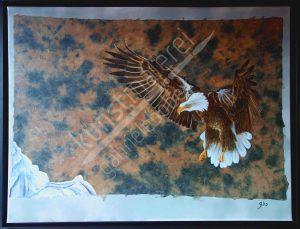 Der Weisskopfseeadler ist das amerikanische Wappentier